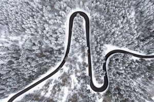 road trees snow covered forest aerial view