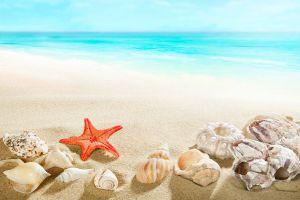 sea sand beach seashells