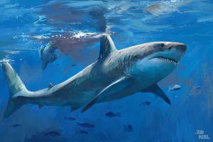 sea shark digital art artwork fish