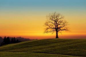 sky grass tree trunk