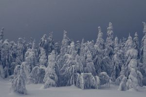 sky landscape snow trees nature forest winter
