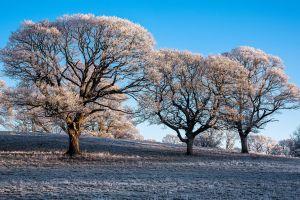 snow ice winter trees outdoors