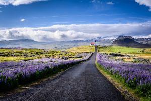 spring sky lavender road landscape
