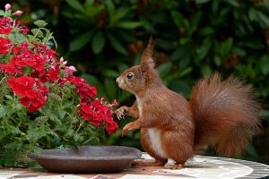 squirrel animals flowers mammals