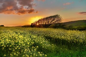 sunlight flowers nature plants field