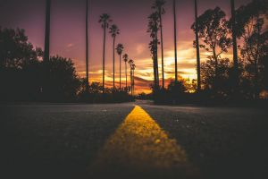 sunset dark palm trees road asphalt