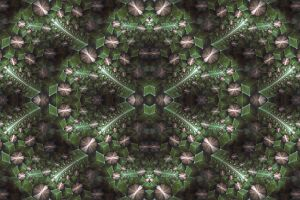 symmetry digital art pattern fractal psychedelic abstract