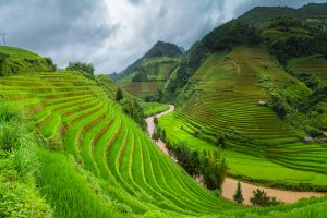 terraced field valley nature grass river rice fields green landscape trees rice paddy clouds asia