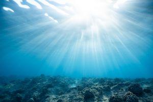 underwater blue coral sea coral reef water sunlight