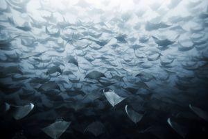 underwater sea life sea nature animals
