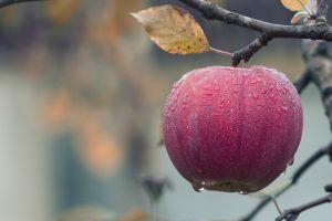 water drops food leaves fruit fall trees apples