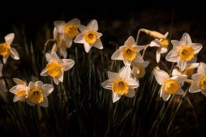 white flowers flowers yellow flowers plants