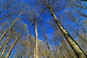 worm's eye view trees nature