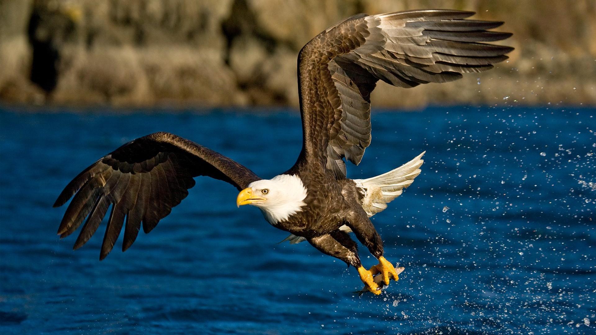 animals eagle birds freedom glider water