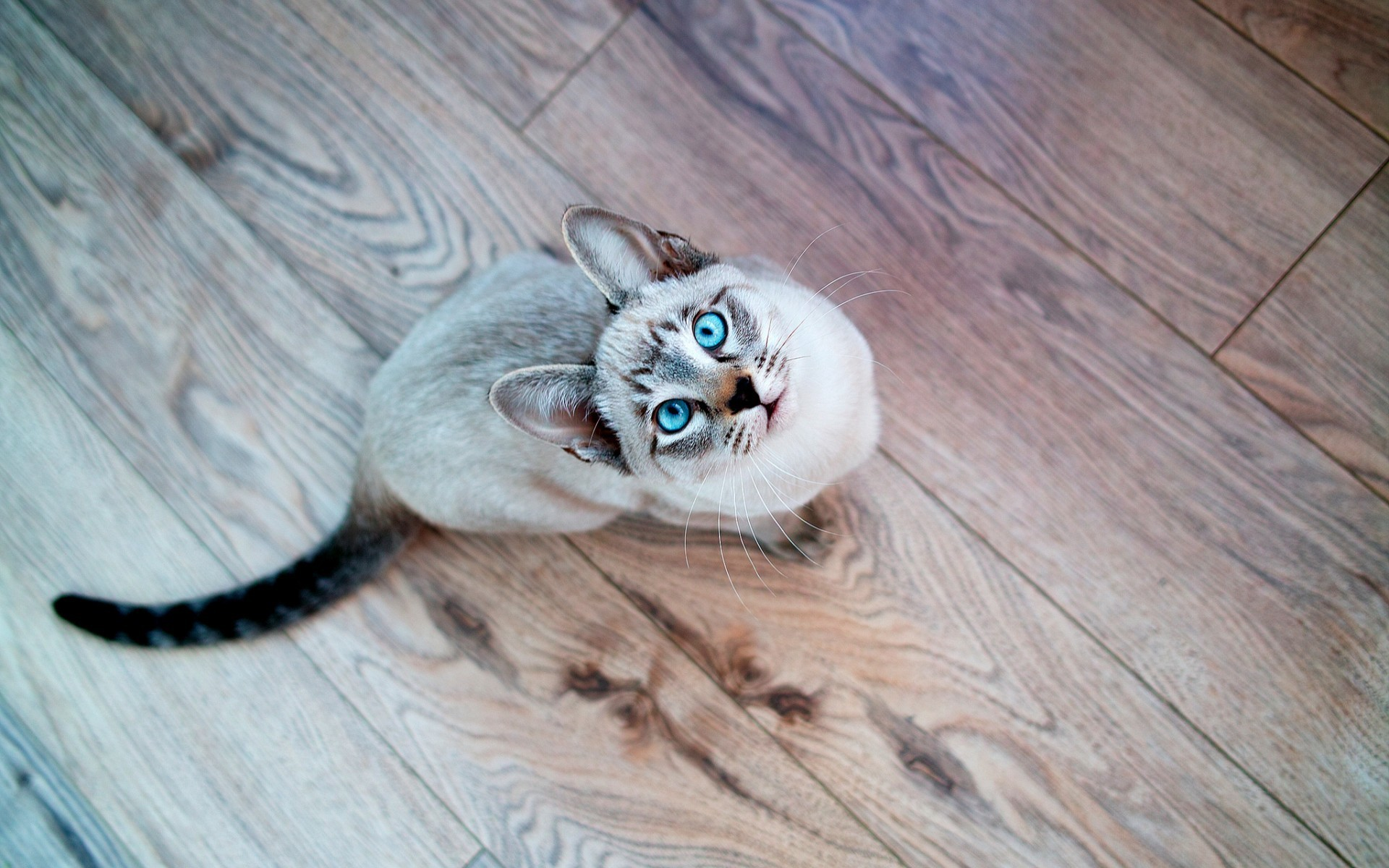animals wooden surface blue eyes looking up cats