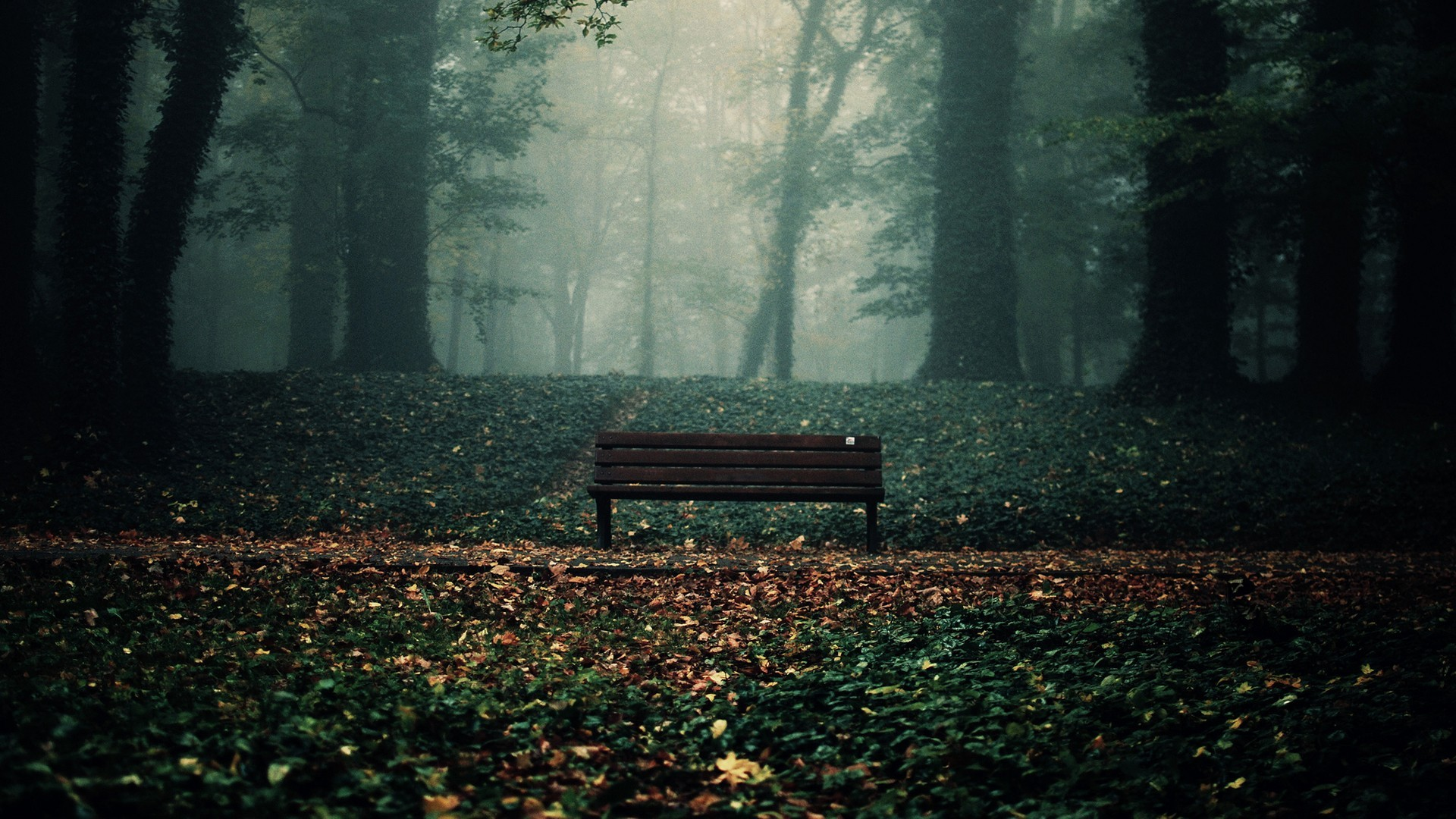bench trees leaves fall forest
