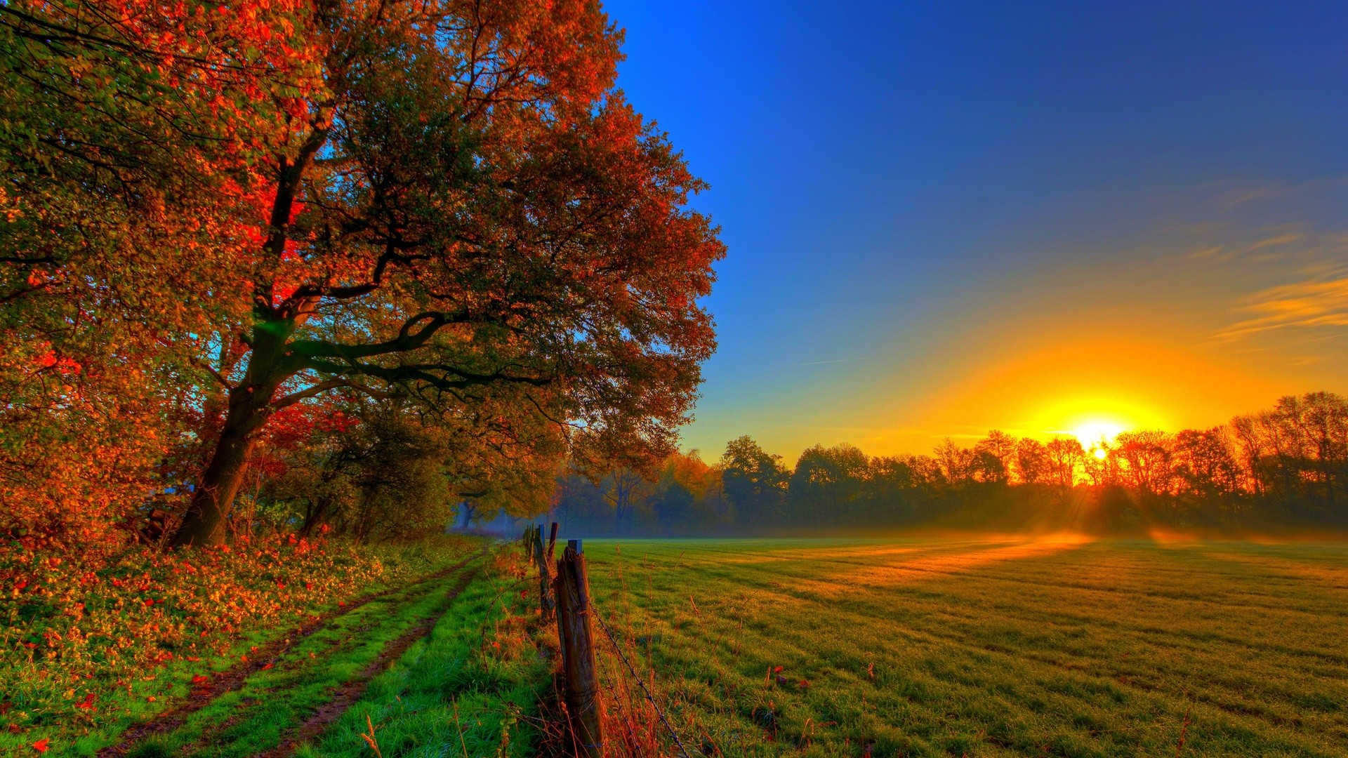 fall landscape field trees sunlight sunset nature