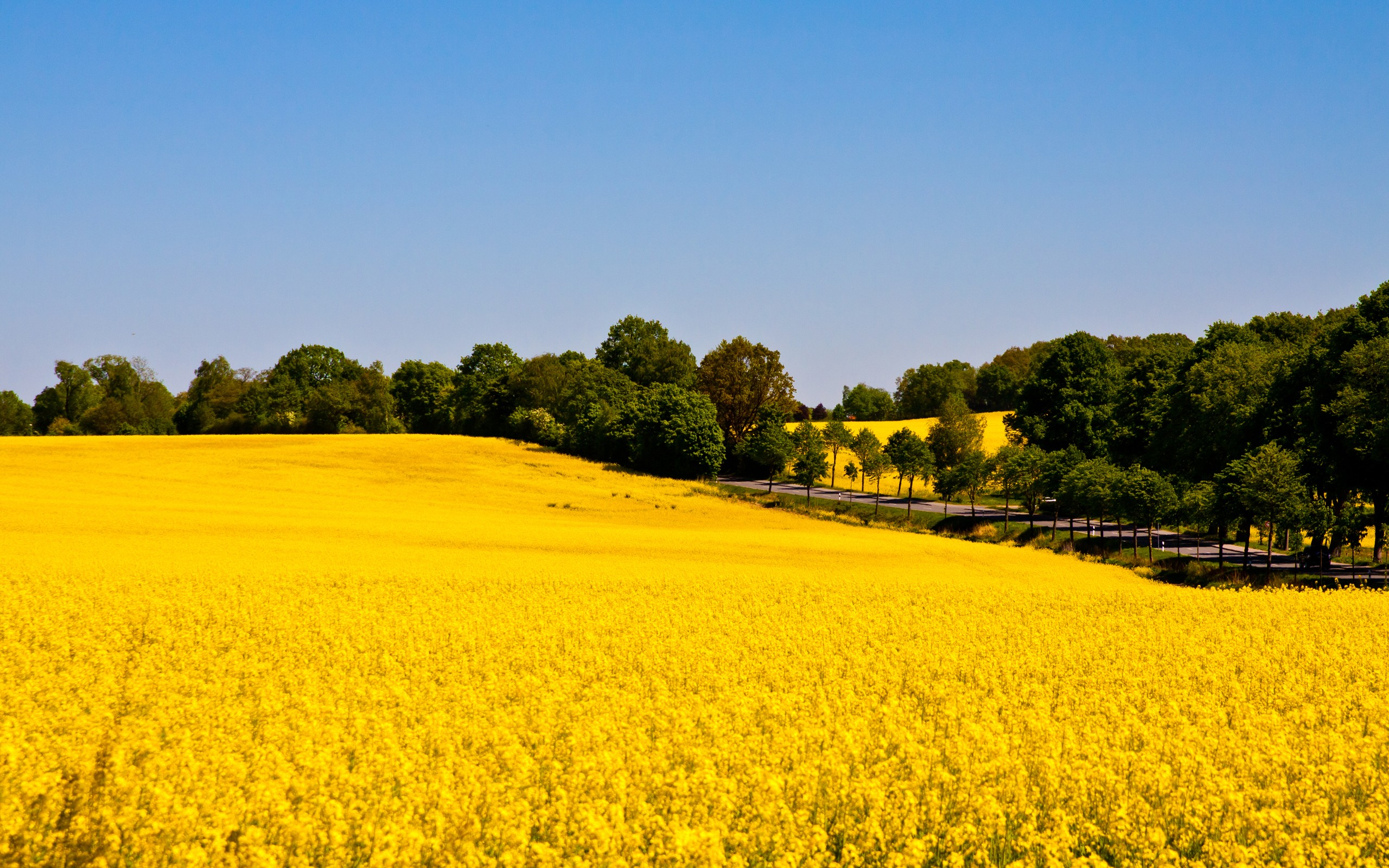 field rapeseed nature landscape