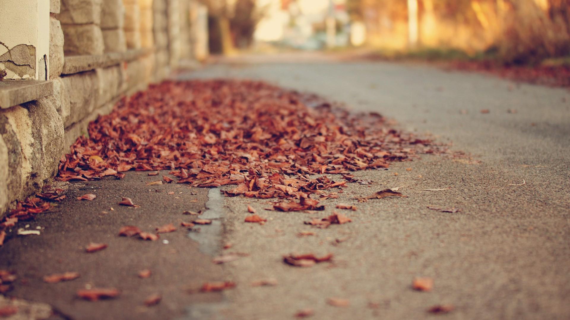 leaves depth of field street fall