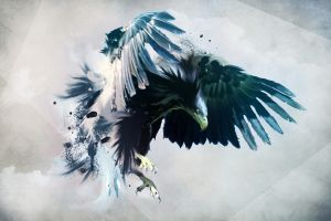 abstract artwork animals eagle digital art hawk (animal) birds