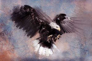 animals artwork birds eagle