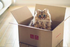 animals ben torode wooden surface cats blue eyes boxes
