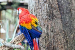 animals birds macaws