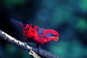 animals birds red