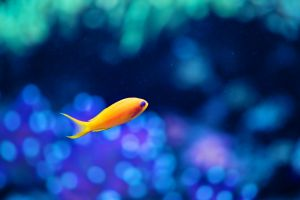 animals bokeh water fish