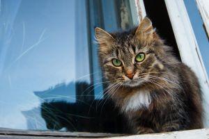 animals cats kittens window