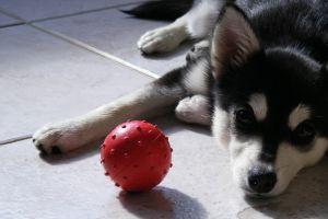 animals dog balls