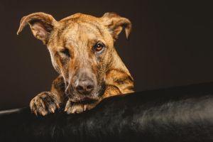 animals dog leather