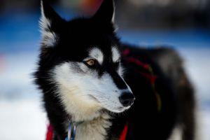 animals dog white black