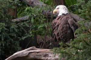 animals eagle birds plants