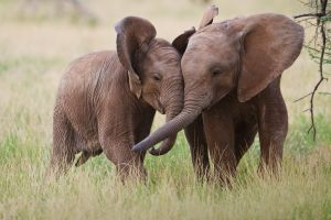 animals elephant baby animals