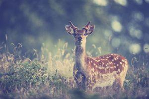 animals filter deer