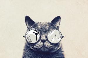 animals glasses cats
