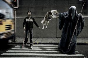 animals grim reaper dog death