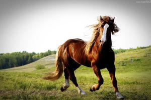 animals horse grass nature