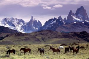animals horse mountains nature