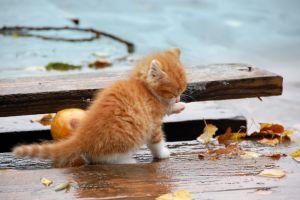animals kittens cats