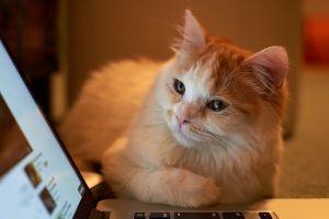 animals laptop cats
