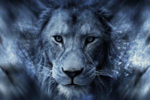 animals lion blue big cats digital art africa