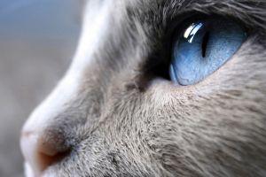 animals nature blue eyes