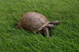 animals nature turtle