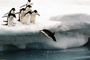 animals penguins snow iceberg birds national geographic
