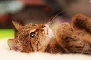 animals pet cats feline