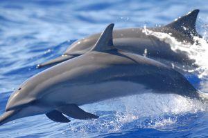 animals sea dolphin