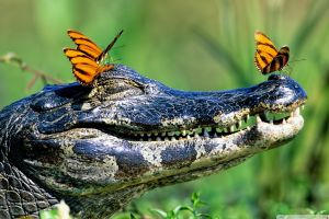 animals smiling happy face reptiles happy face butterfly