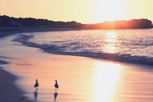 animals sunlight sea beach birds